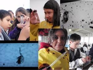 plankton copy