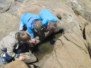 Exploring tide pools at Bean Hollow
