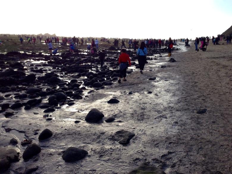 crowded tidepools