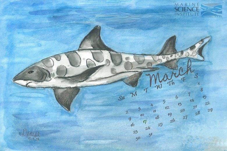 leopard shark calendar