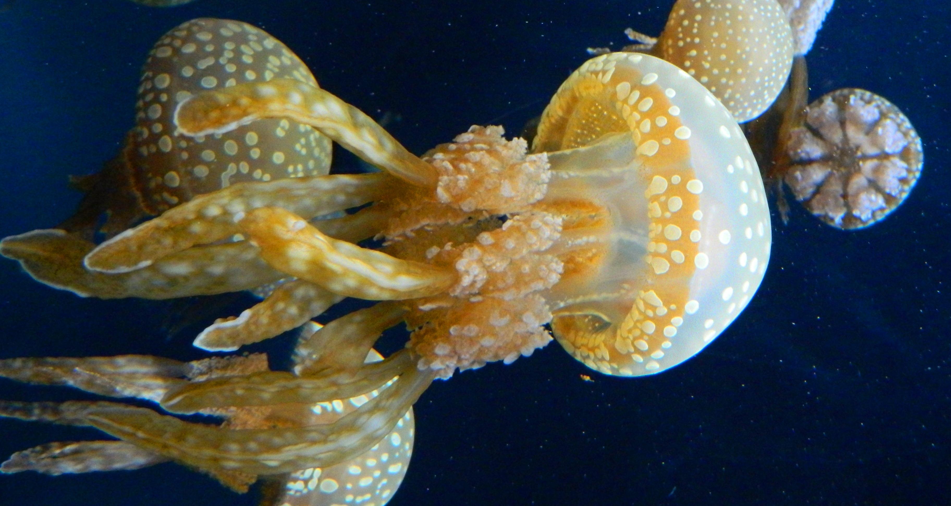 Common parasites of california marine fishes.