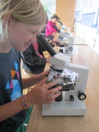 Looking at plankton