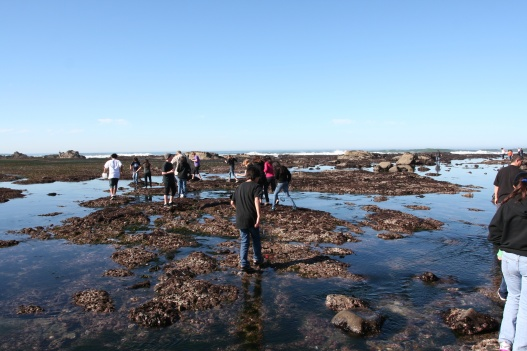 Pillar Point Tide Pools