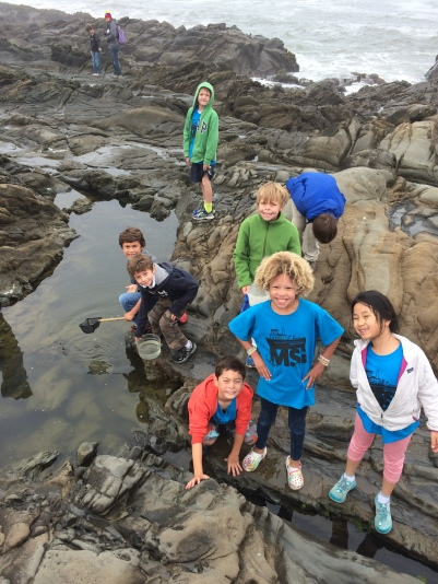 Explorers in the tide pools at Pebble Beach/Bean Hollow
