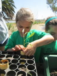 Campers helped to transplant seedlings at Save the Bay's native plant nursery. These plants were used to restore wetland areas.