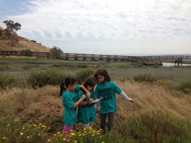 Campers study life in the salt ponds and sloughs at Don Edwards National Wildlife Refuge in Fremont.