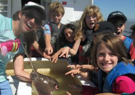 Bat ray from the Bay!