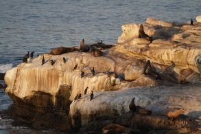 Sea lion rookery